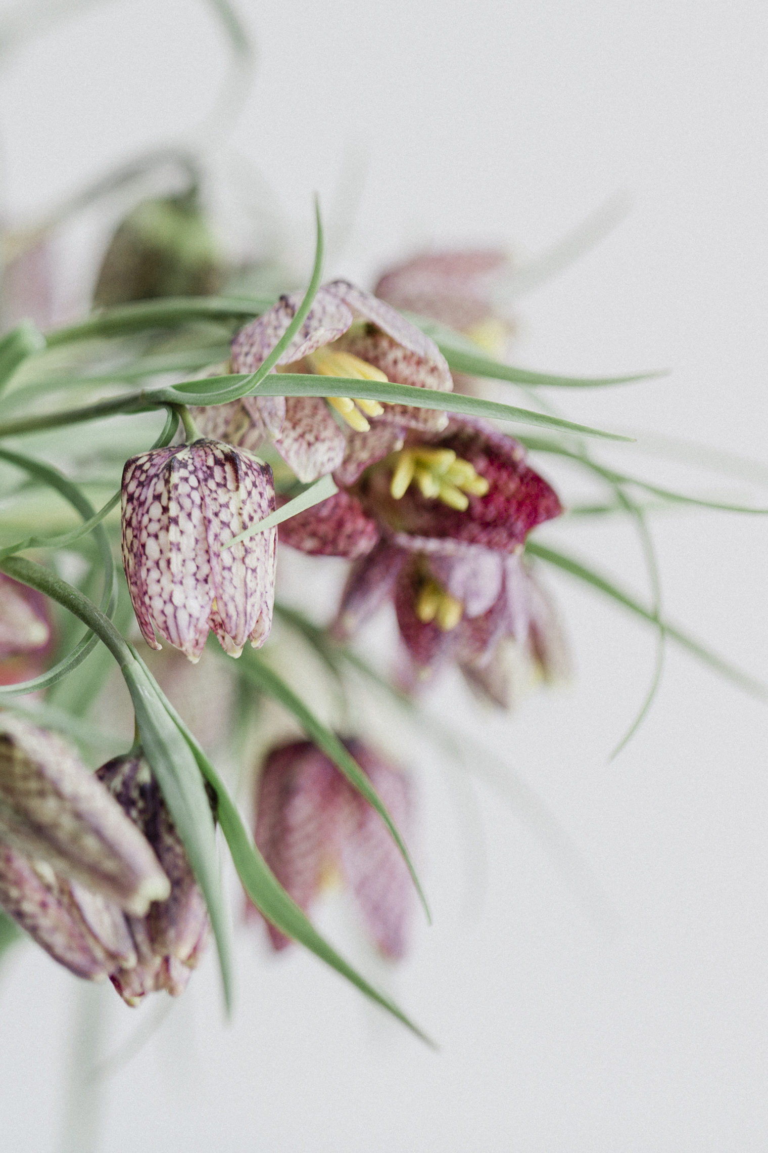 Fritillaria arranged without floral foam