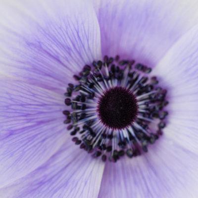 The Coronavirus 29/03/20 | Floristry Industry Insight
