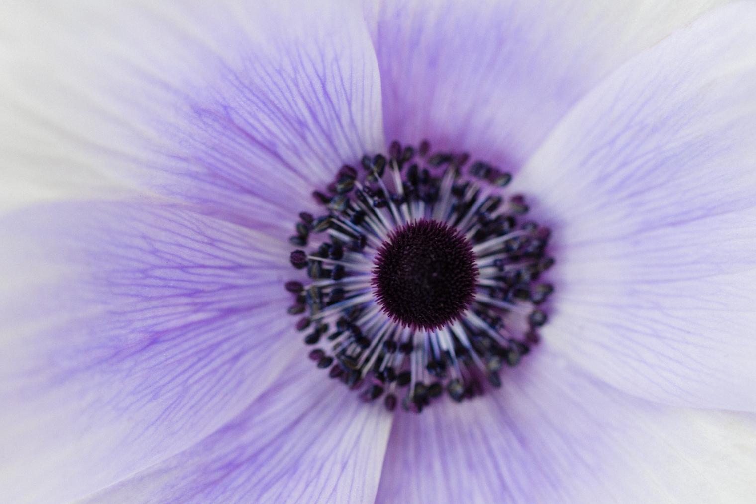 The Coronavirus 29/03/20   Floristry Industry Insight