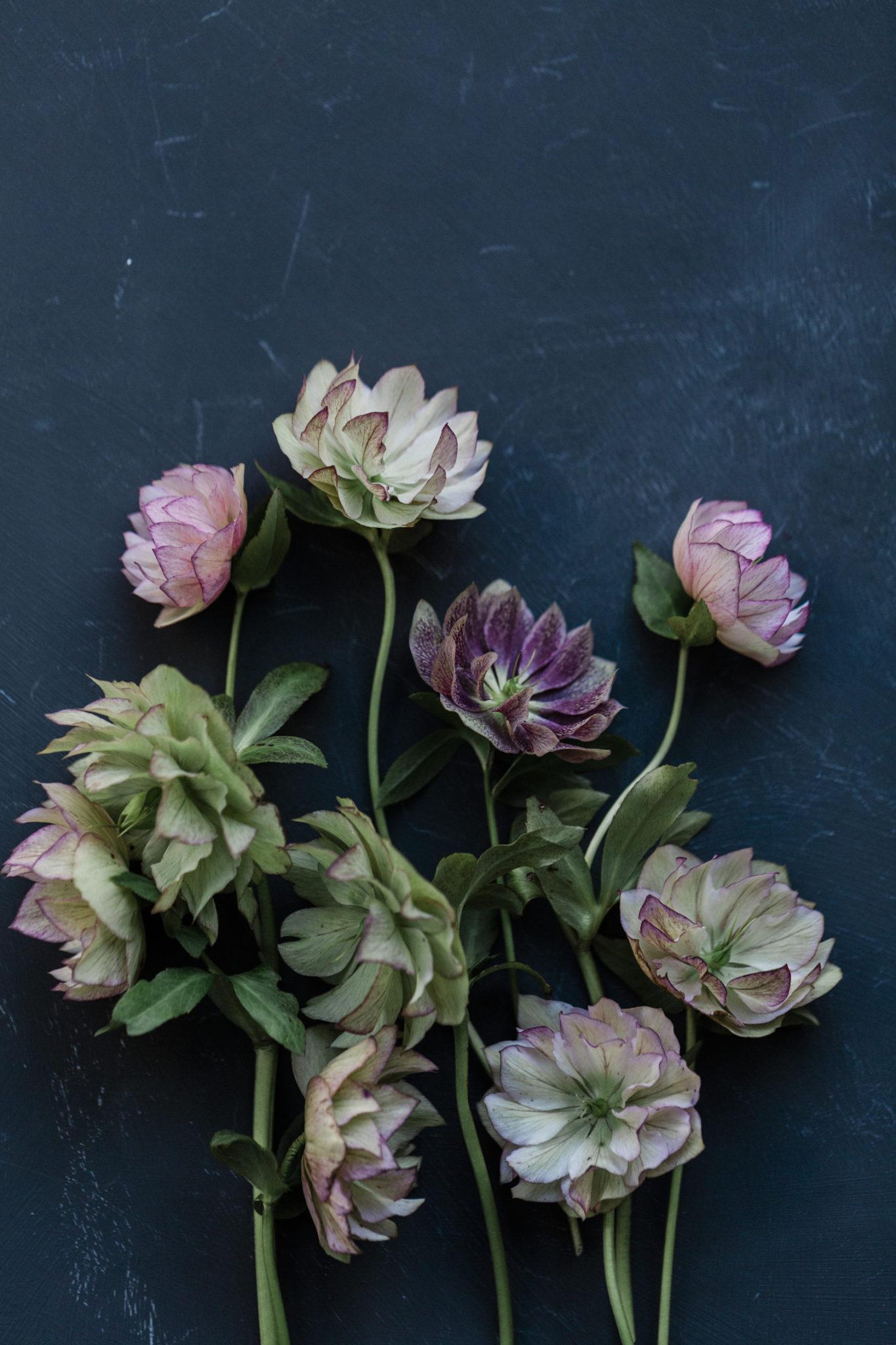 Instagram for Florists online course