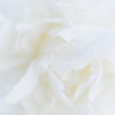 The Coronavirus 05/04/20 | Floristry Industry Insight