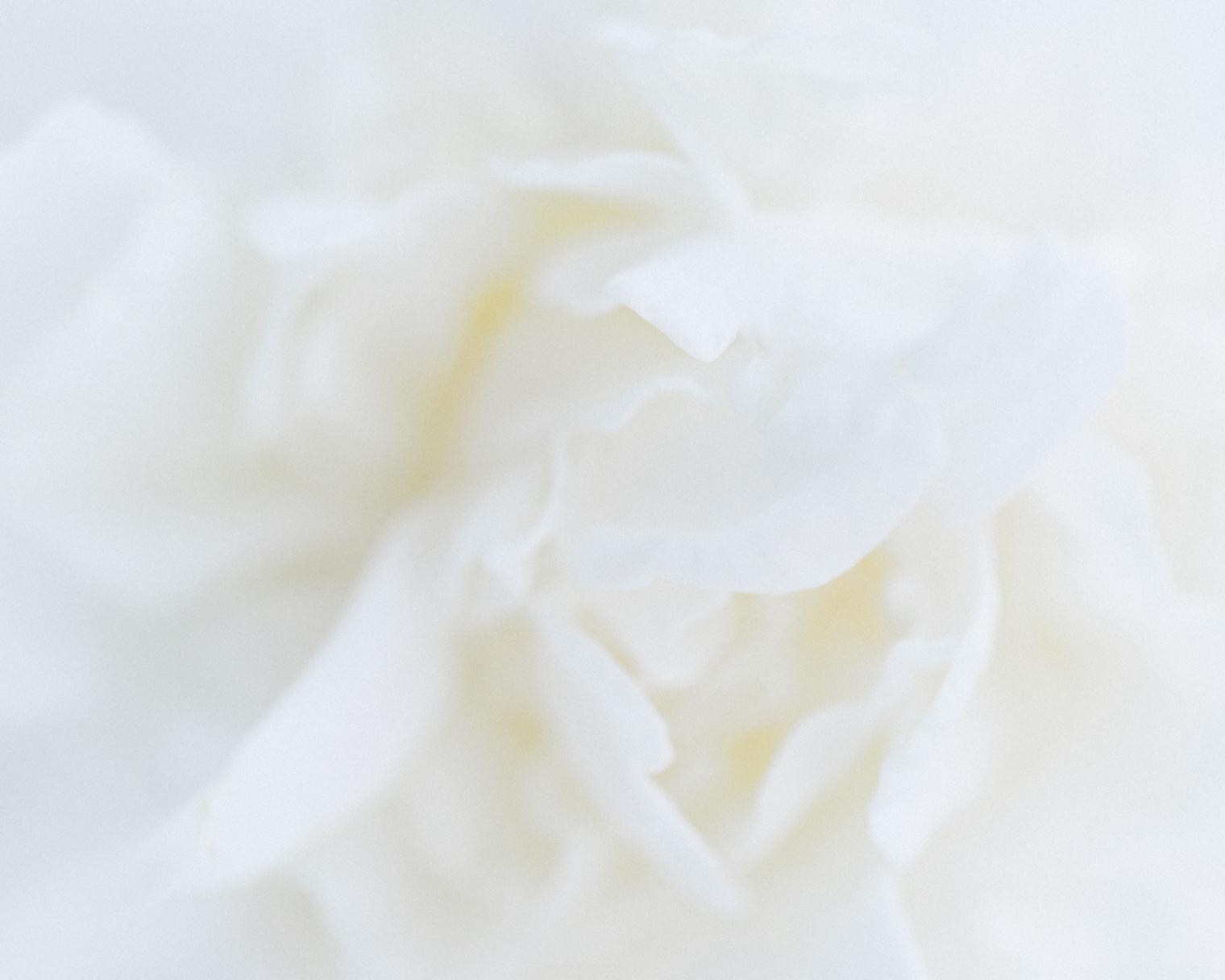 The Coronavirus 05/04/20   Floristry Industry Insight
