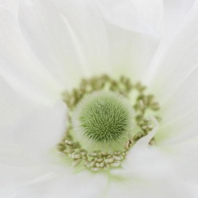 The Coronavirus 19/04/20 | Floristry Industry Insight