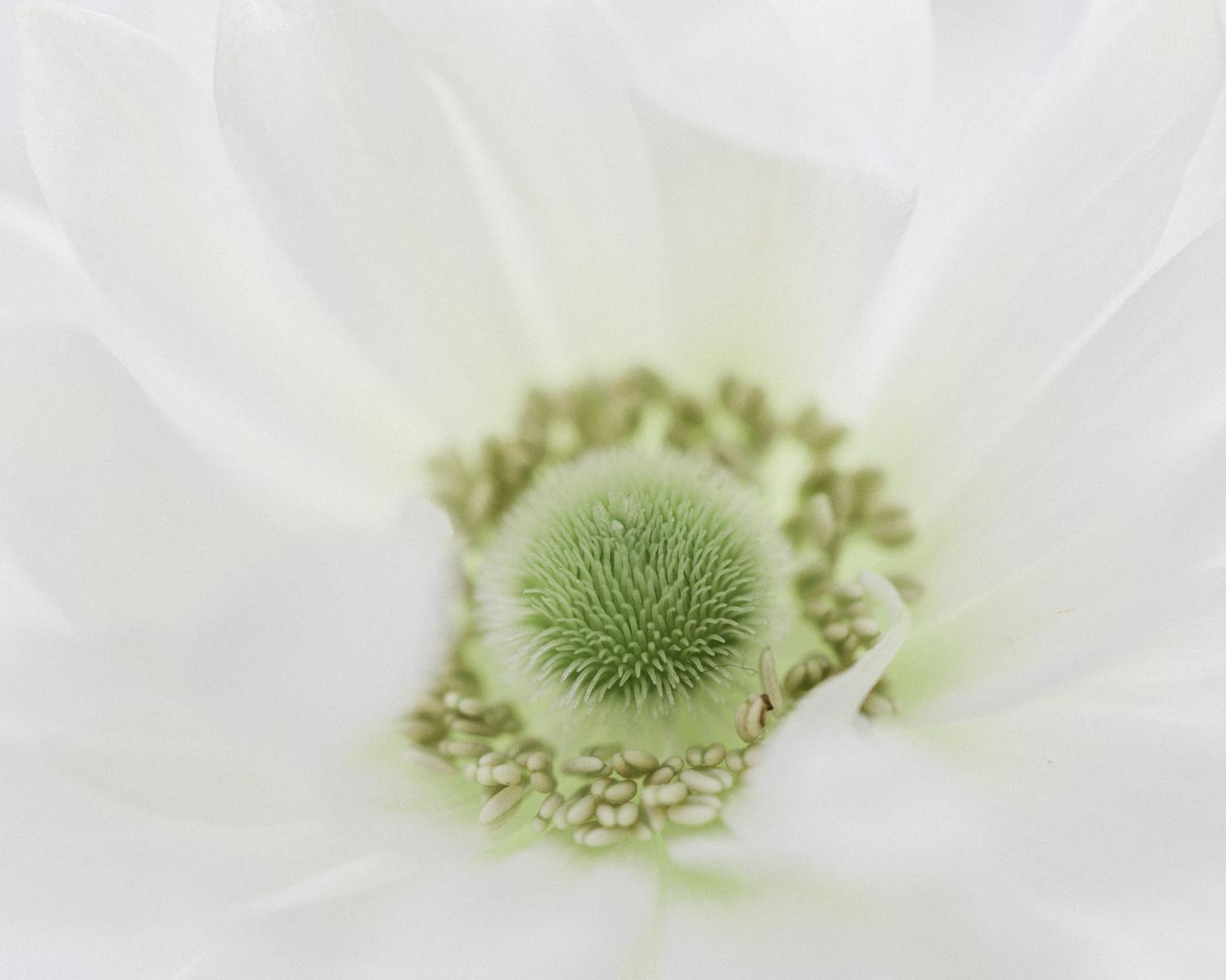 The Coronavirus 19/04/20   Floristry Industry Insight