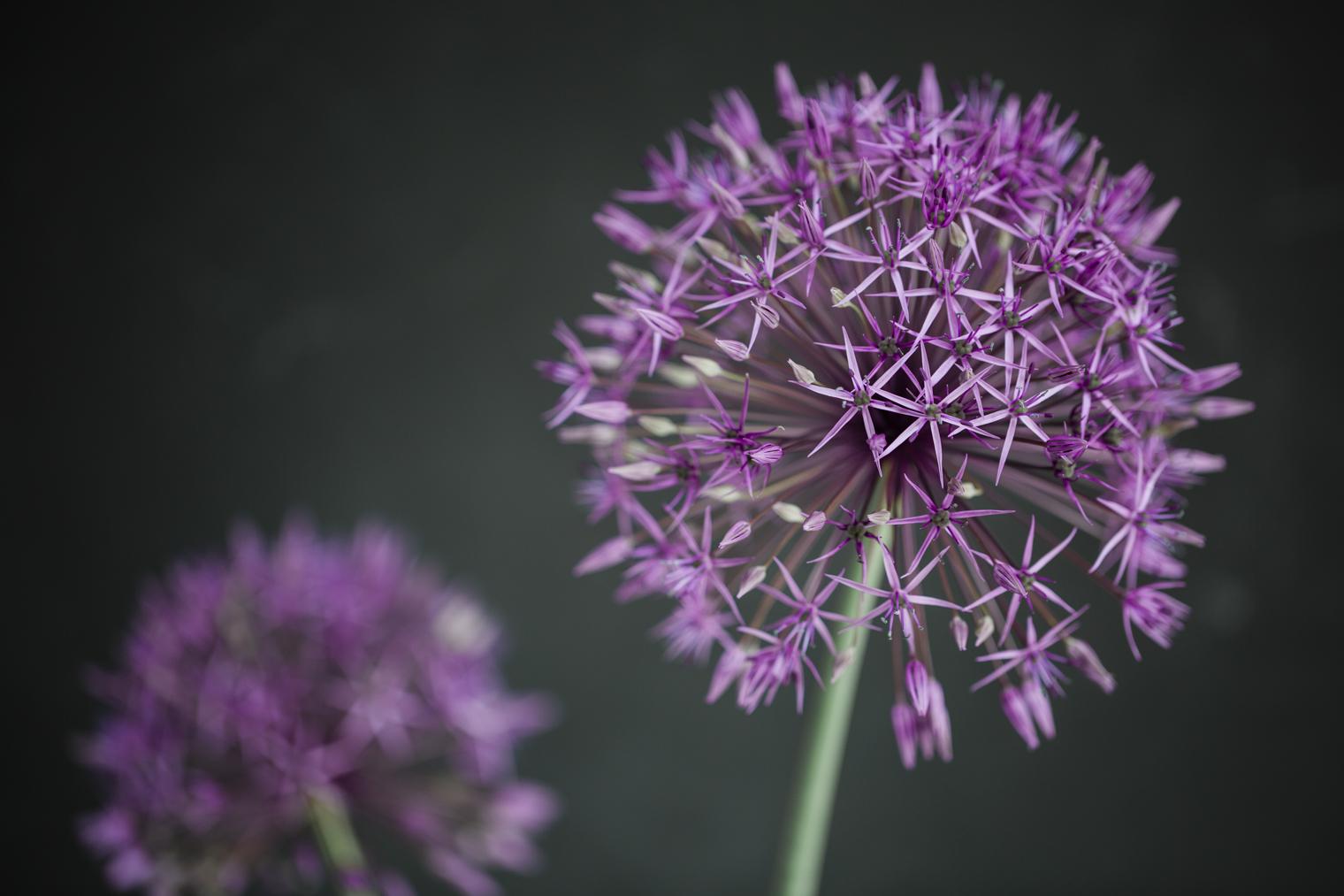 The Coronavirus 03/05/20 | Floristry Industry Insight
