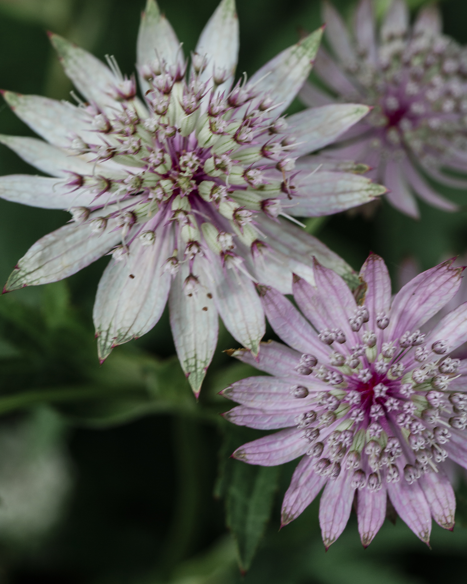 Picking your own flowers - Plantpassion - Surrey