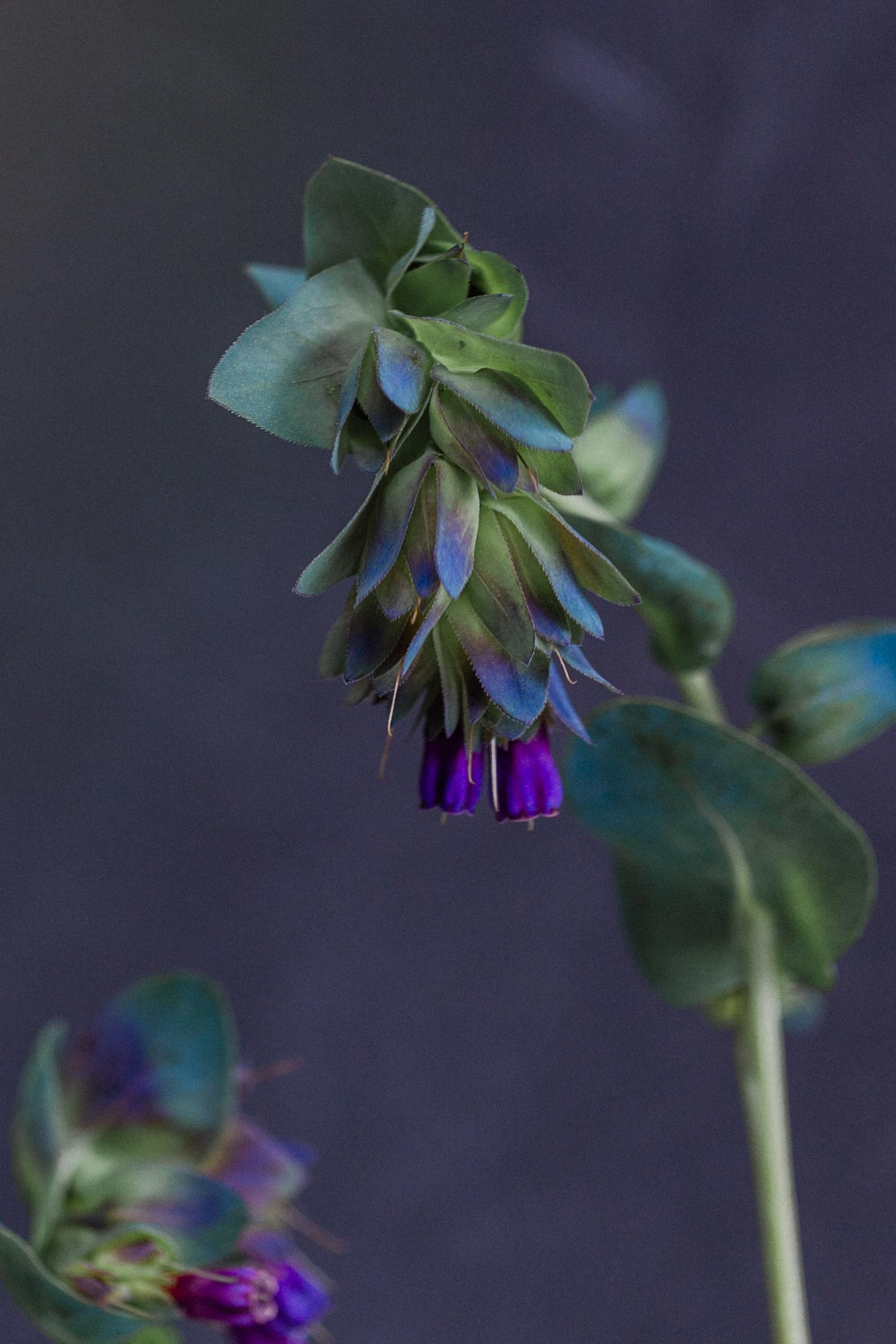 Flower arranging Rona Wheeldon Flowerona
