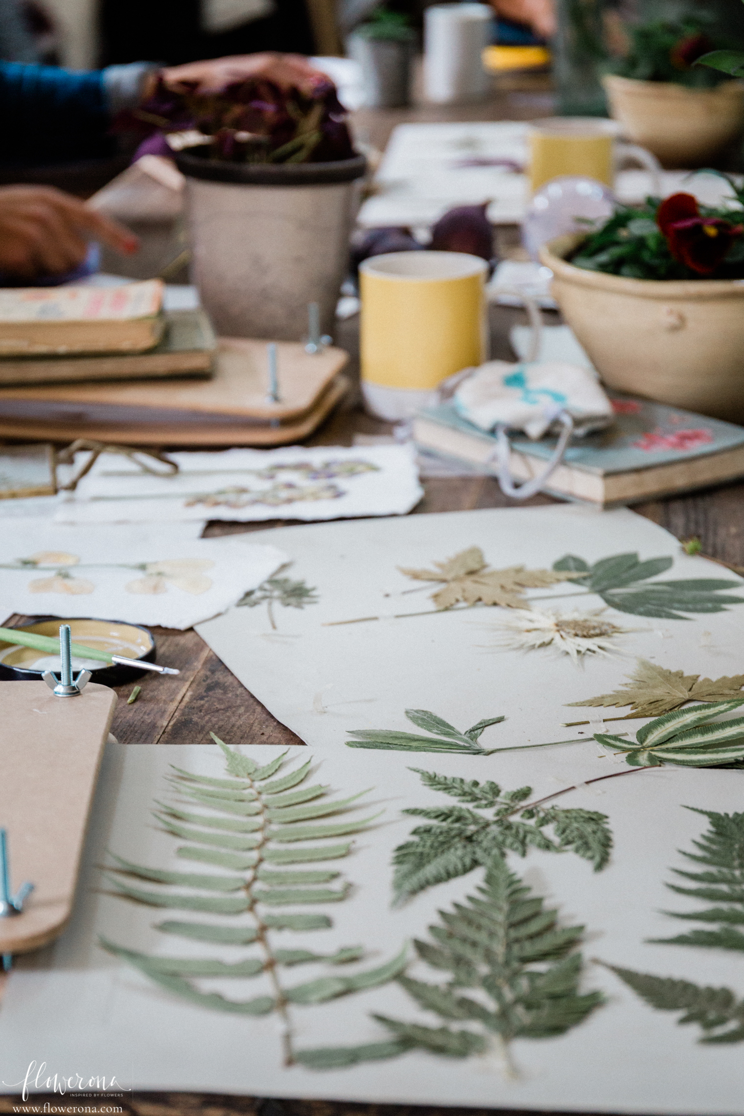 Flower Pressing & Cyanotype Print Workshop with JamJar Edit