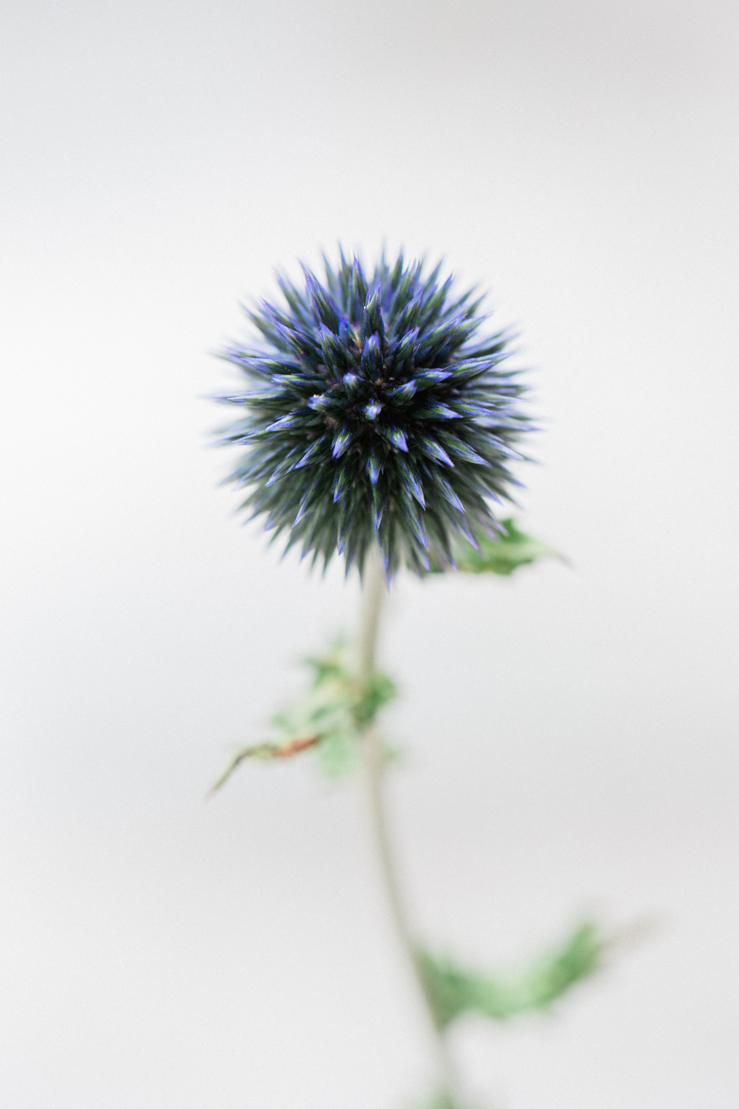 Flower Power Festival | Floristry Industry Insight