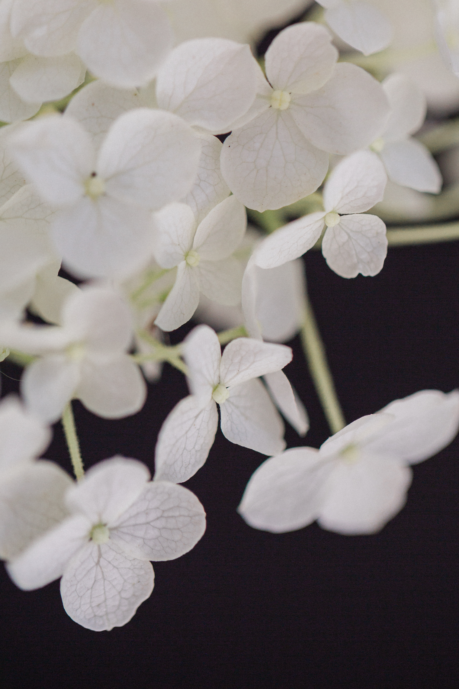 Blooming Brilliant Bouquets - White Hydrangea