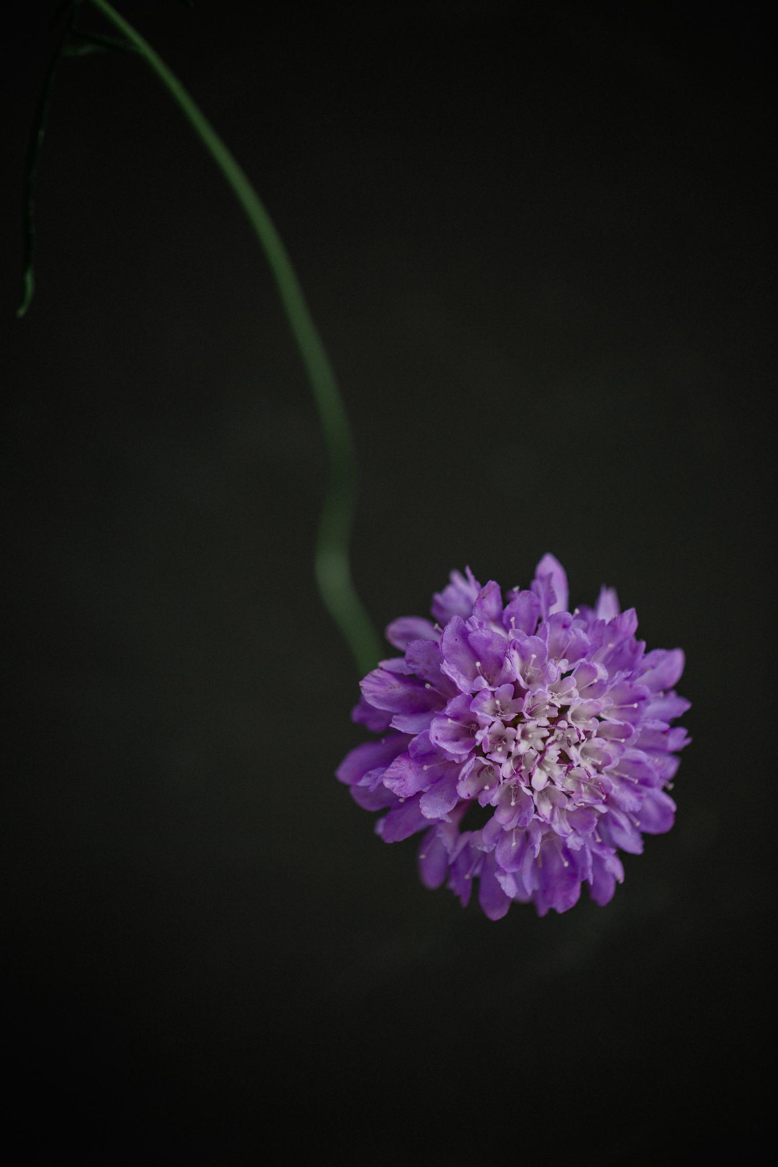 McQueens Flowers Arriving in Mayfair   Floristry Industry Insight