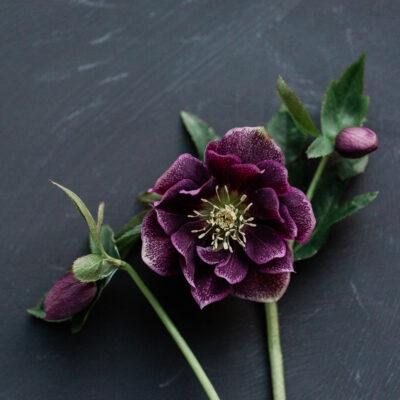 McQueens Opens in John Lewis | Floristry Industry Insight