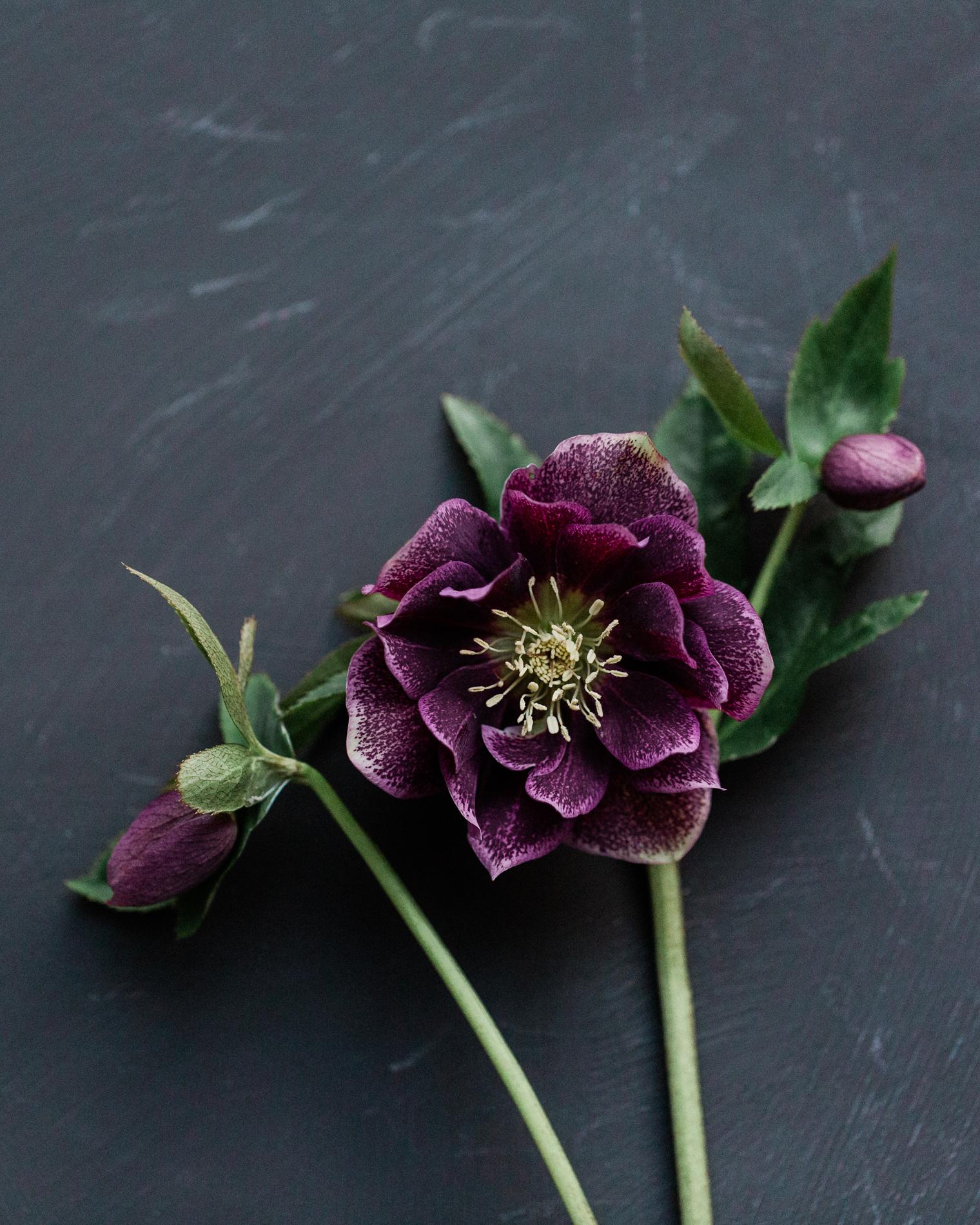McQueens Opens in John Lewis | Floristry Industry Insight | Hellebore