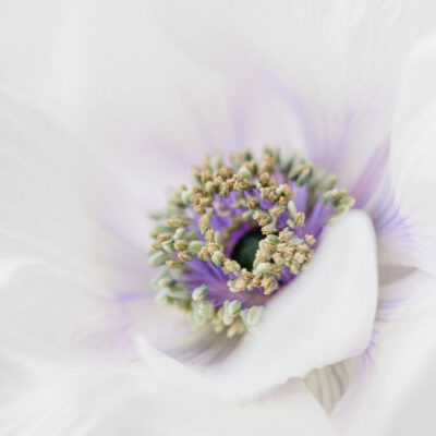 Pantone Color of the Year 2021   Floristry Industry Insight