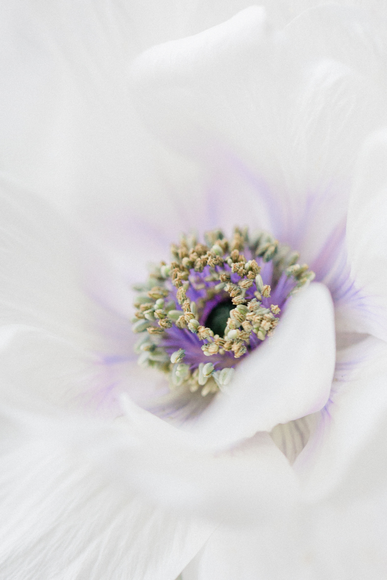 Pantone Color of the Year 2021 Post   Anemone