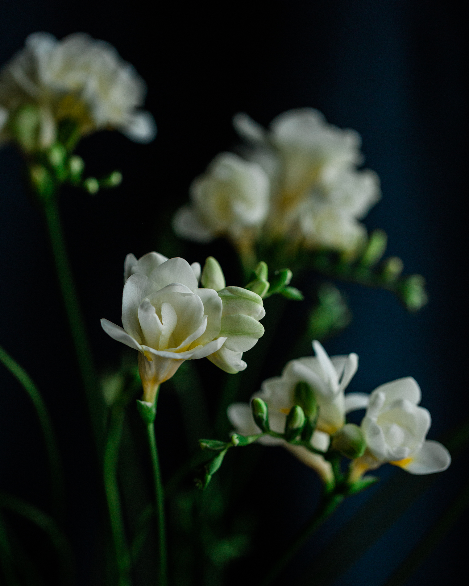 Wreaths, garlands and flowers | White Freesias