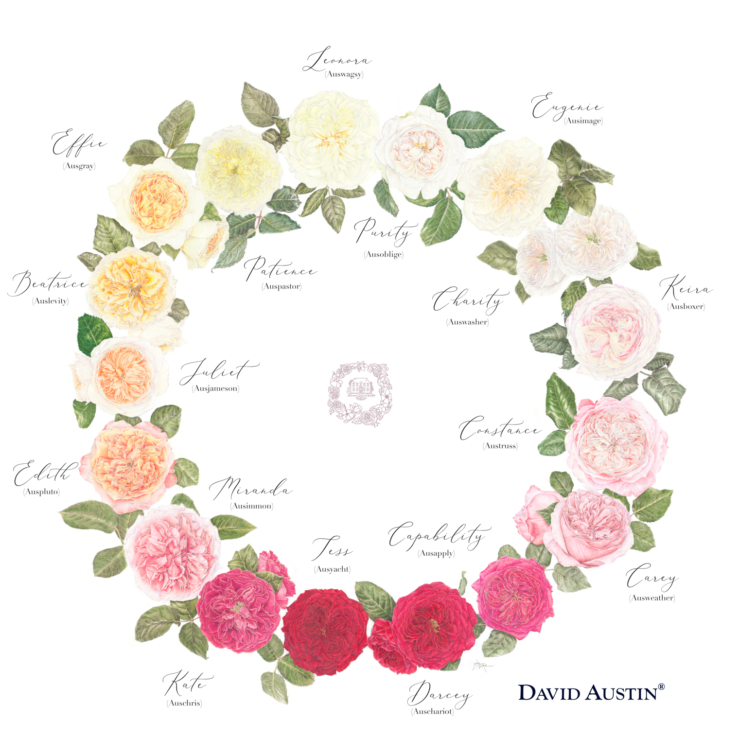 David Austin Wedding Roses Colour Wheel