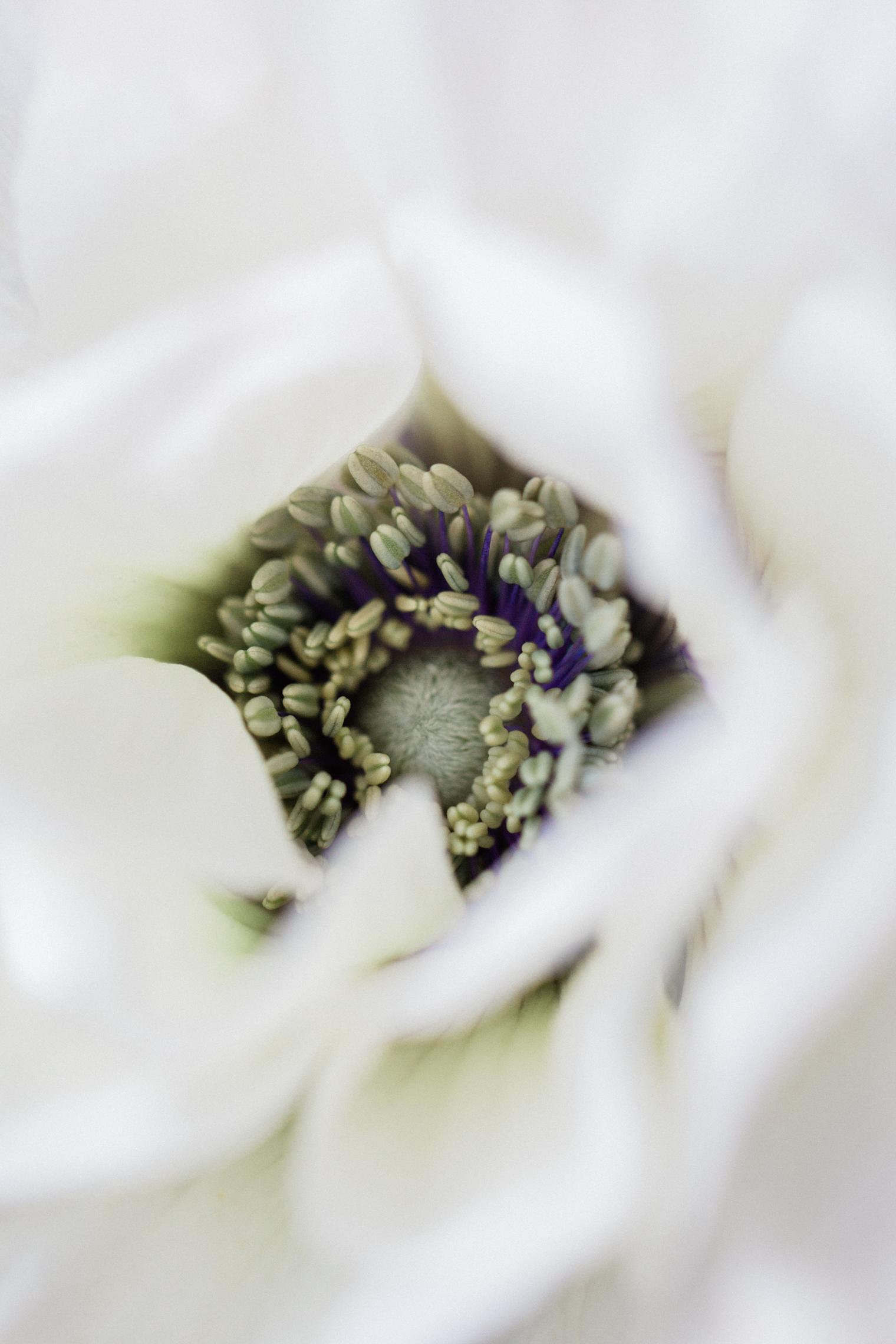 Flower Trends - Floristry Industry Insight - Rona Wheeldon - Flowerona