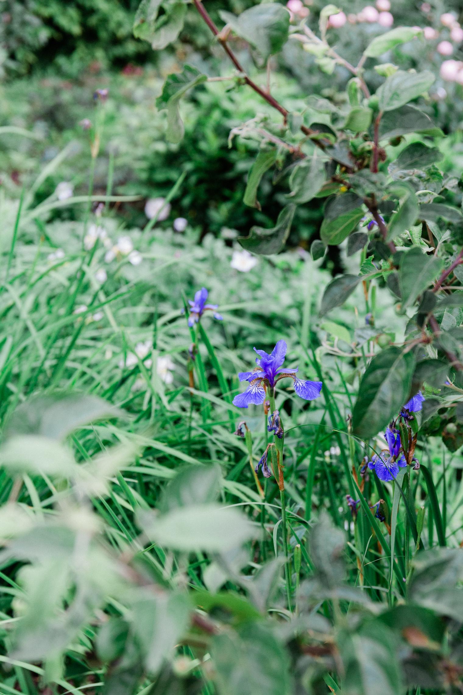Cutting Garden at Thyme