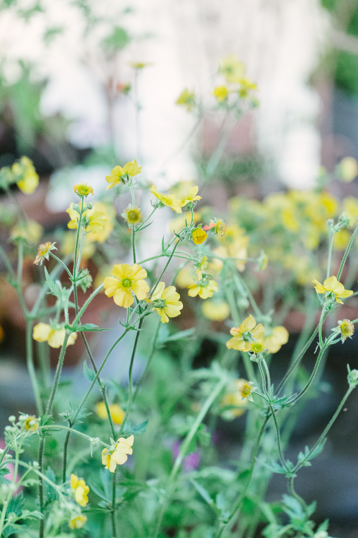 British Flowers Week 2021 - Simon Lycett