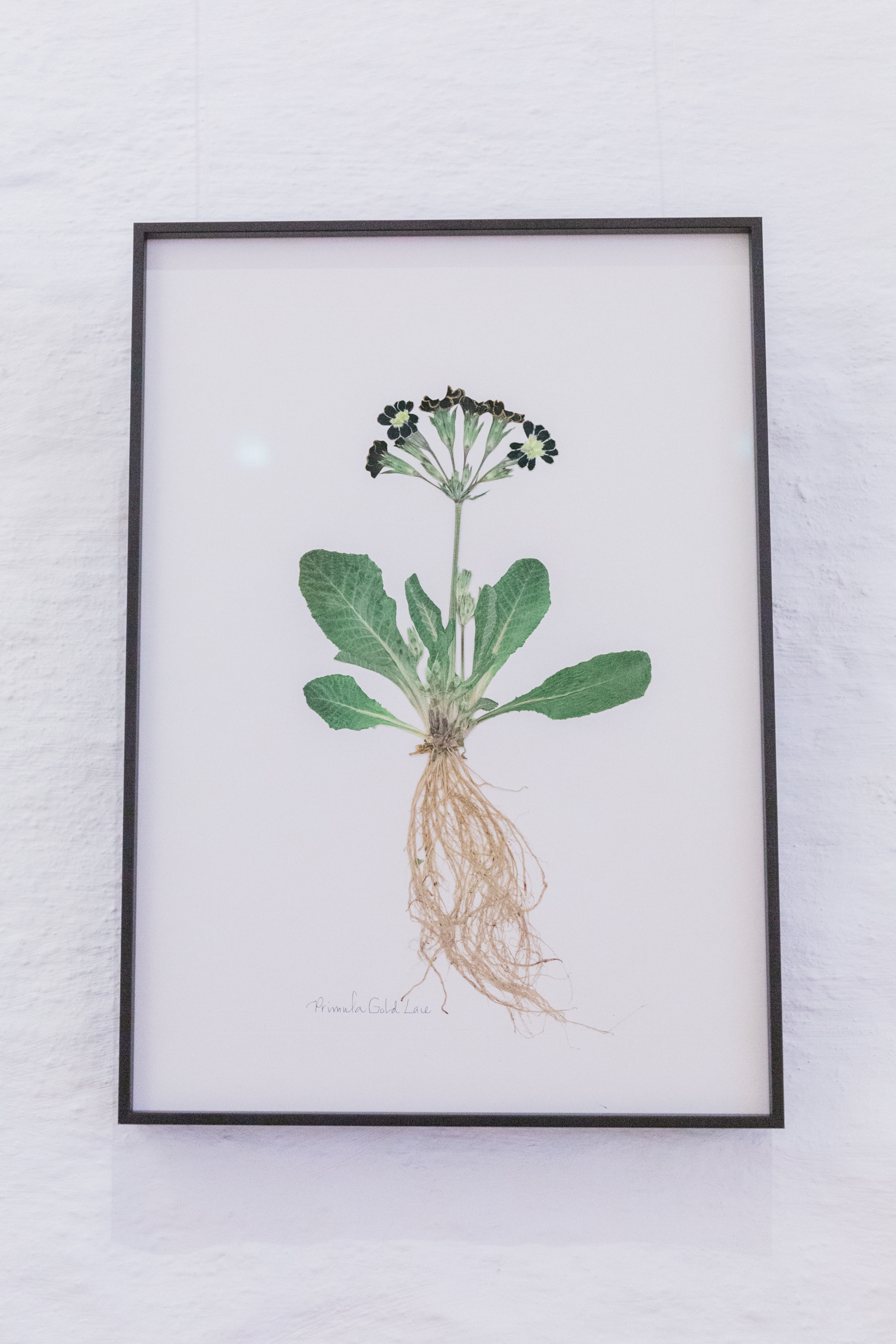 The Nature of Thyme Exhibition