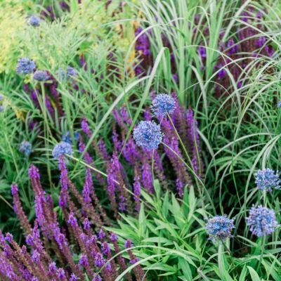 The RHS Garden for a Green Future | RHS Hampton